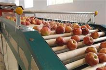 地瓜土豆清洗机