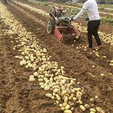 手扶拖拉机带动土豆收获机 红薯收货机