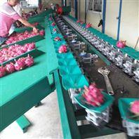 广东云浮火龙果分大小用的机器 重量选果机