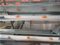 蛋鸡笼  提供全套鸡笼报价方案