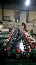 三代先进的优质桃子选果机厂家直销,*桃子分选机