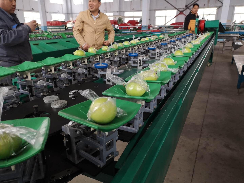龍口蘋果分選機供應