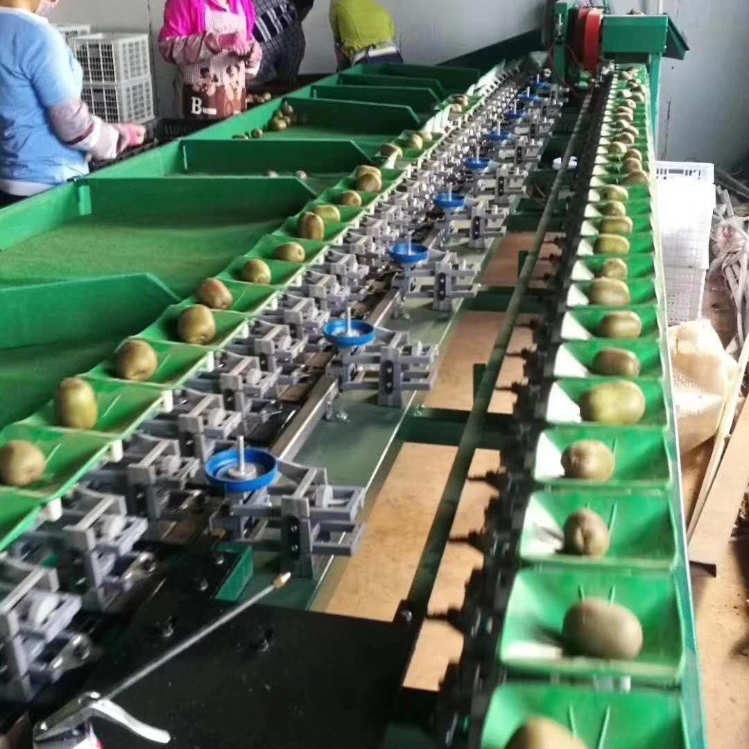 全自动中国台湾蜜枣果机 青枣自动分选分级设备