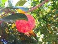 关于举办新疆林果业和特色作物生产机械化论坛的通知
