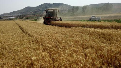 山东淄博探索千赢国际城农艺融合实现减药减肥增产