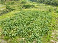 重庆市农业机械鉴定站关于《小型收割机》等农机推广鉴定大纲征求意见的函