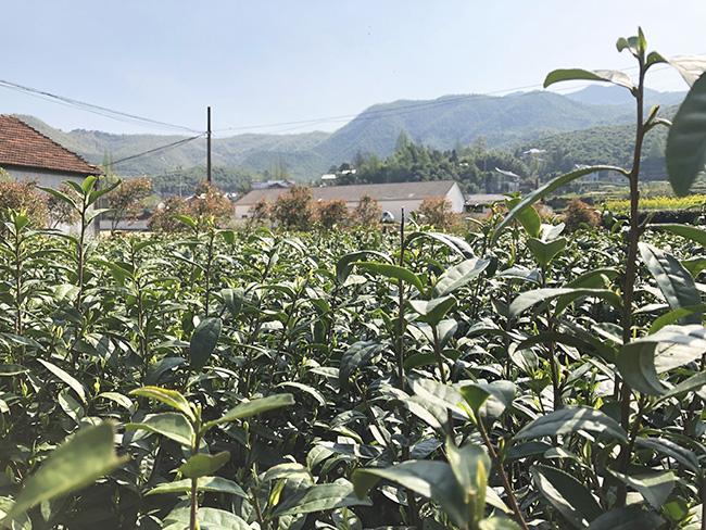 《意見》解讀:鄉村產業將迎來空前發展,農機行業有哪些機遇?