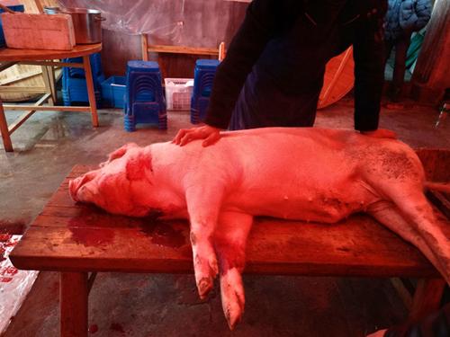 农业农村部调整跨省调运种猪产地检疫有关要求