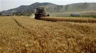 山東關于對違規農機購置補貼産品進行聯動處理的通知
