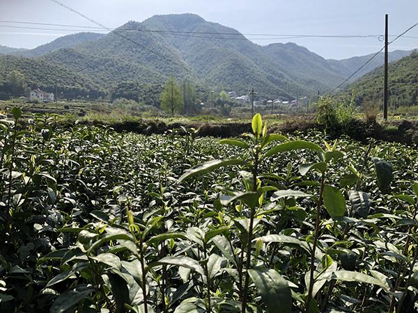 湖北省部分市县农机补贴最新动态:宜都市已结算78.281万元
