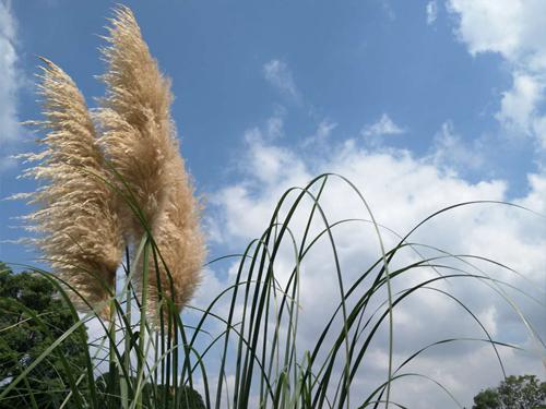"""8月13日:""""农产品批发价格200指数""""比昨天上升0.30个点"""