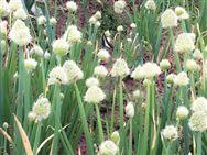 """農業農村部對""""關于開展農業節肥節藥行動打贏污染防治攻堅戰在河南建立先行先試的建議""""回復"""