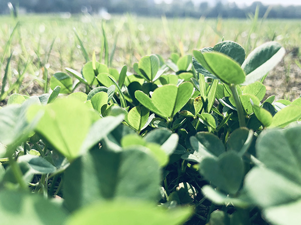 江西省關于對山東瑞科農業裝備有限公司等企業及有關補貼產品進行處理的通報