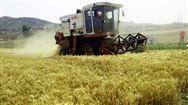 河北省農業農村廳關于做好2019年度小麥節水品種及配套技術推廣補貼項目供種工作的通知