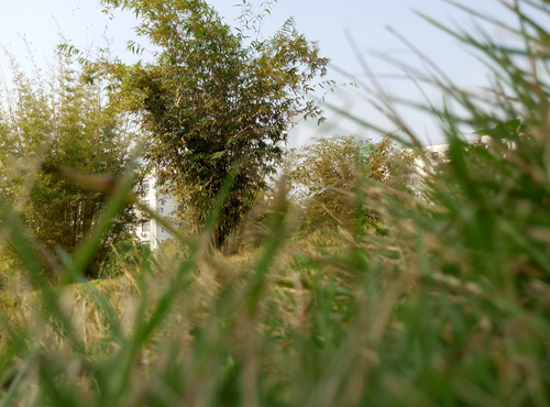 加强农药市场管理,防虫保丰收与减少农药同步进行