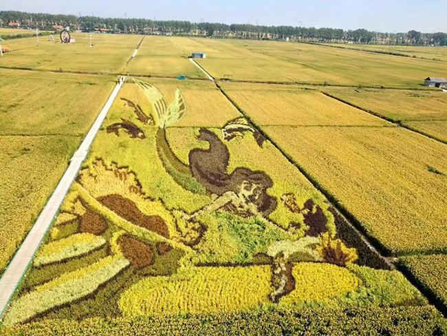 丰收季农机安全不能忘:各地积极开展农机安全检查工作