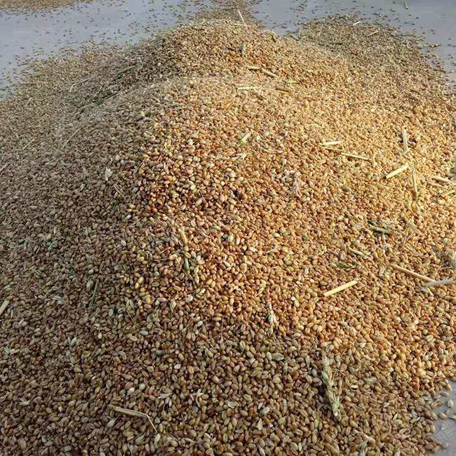 八部门联合发文确保今年秋粮收购工作顺利进行