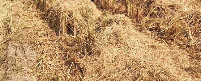 江西省各地秋季农业生产工作进展顺利