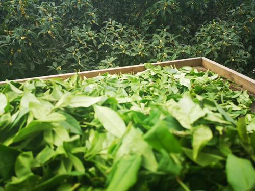 农业农村部办公厅关于推介第一批全国家庭农场典型案例的通知