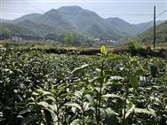 浙江省农业农村厅关于对浙江博源农机有限公司等企业违规经营行为处理的通知