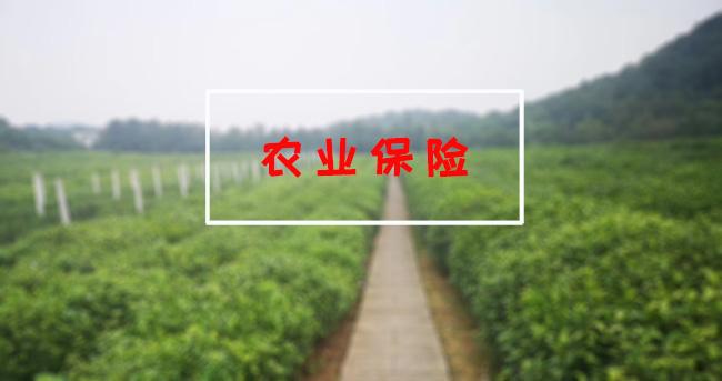 """農業保險—保障農民利益的""""最后一道屏障"""""""