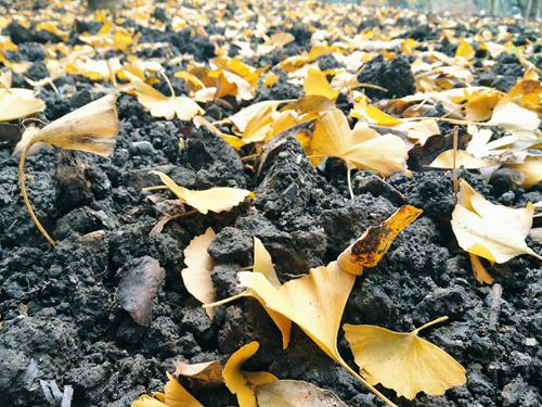 沈躍躍在農業農村部調研《土壤污染防治法》貫徹實施情況
