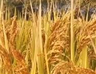 山东省永利皇宫官网2019年第三批农机购置补贴归档产品信息的公示