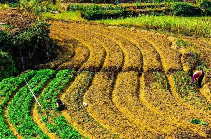 三农问题的重中之重:如何增加农民收入?