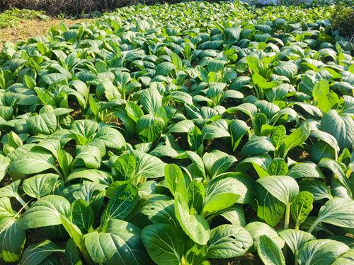 关注:春节即将来临,农产品价格会有怎样的变化?