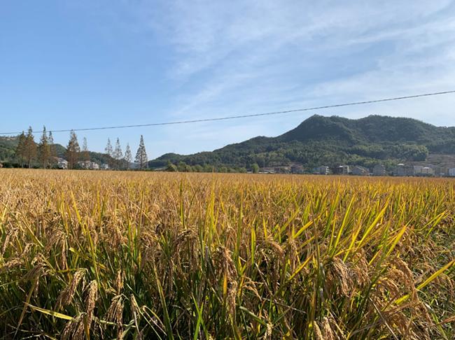 河南省关于正式启用2020年农机购置补贴辅助管理系统的通知