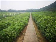 2020年農業農村重點工作部署的實施意見