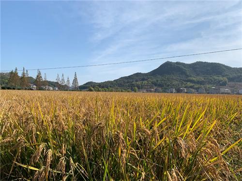 這些企業谷物干燥機質量如何?湖南省公布質量調查結果