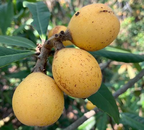 單臺機具補貼額不超過20萬!貴州省對農機新產品購機者實施資金補助